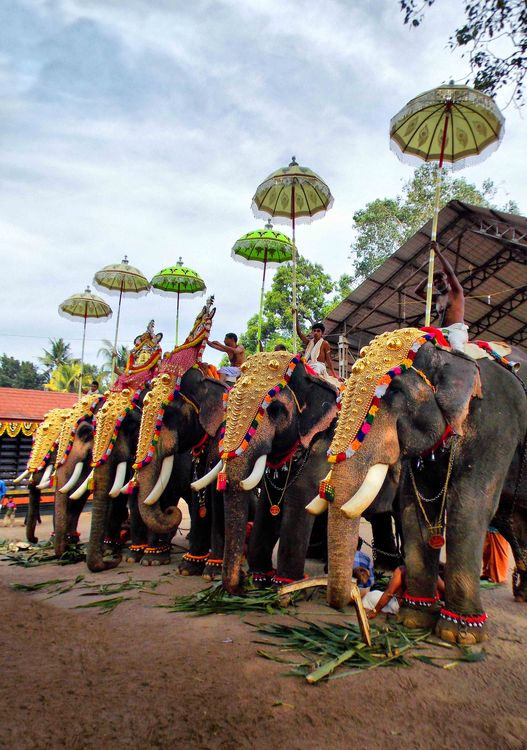 Elephant procession Kerala Temple